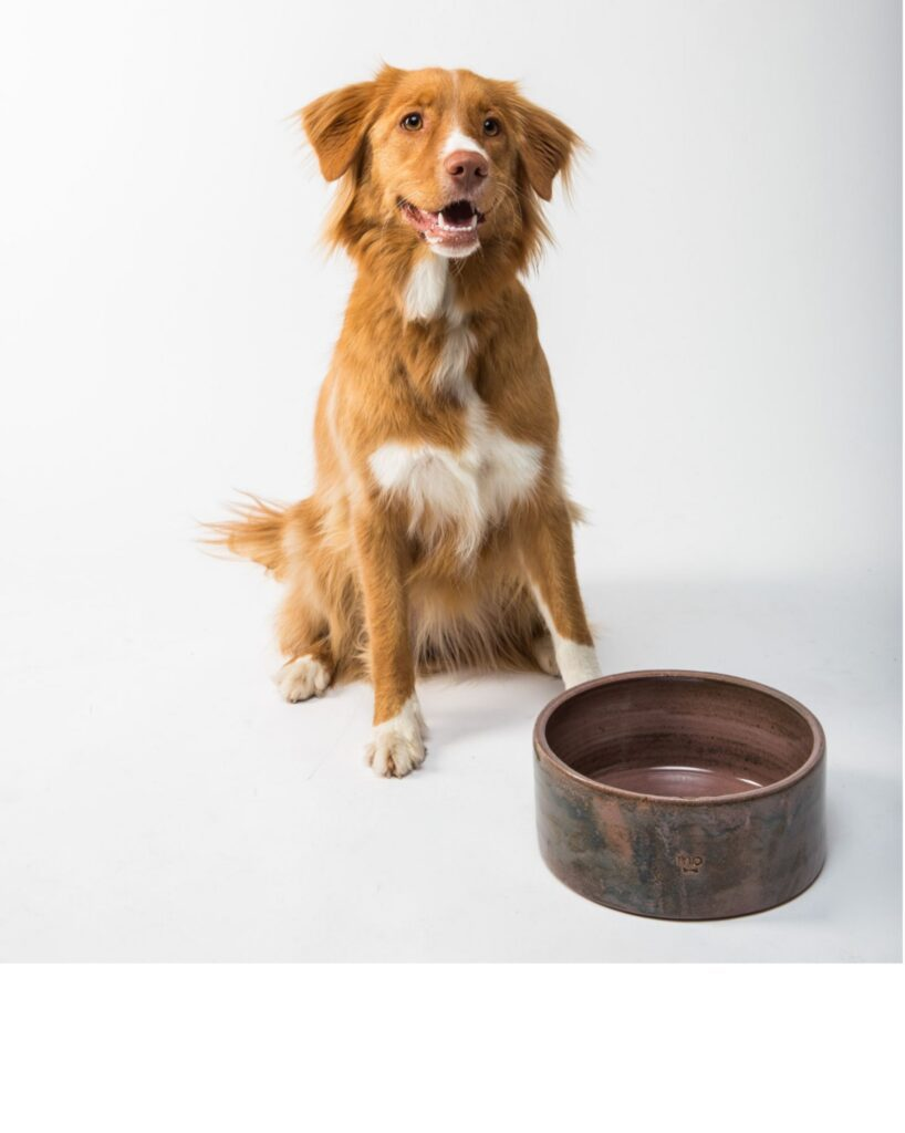 Which dog bowl