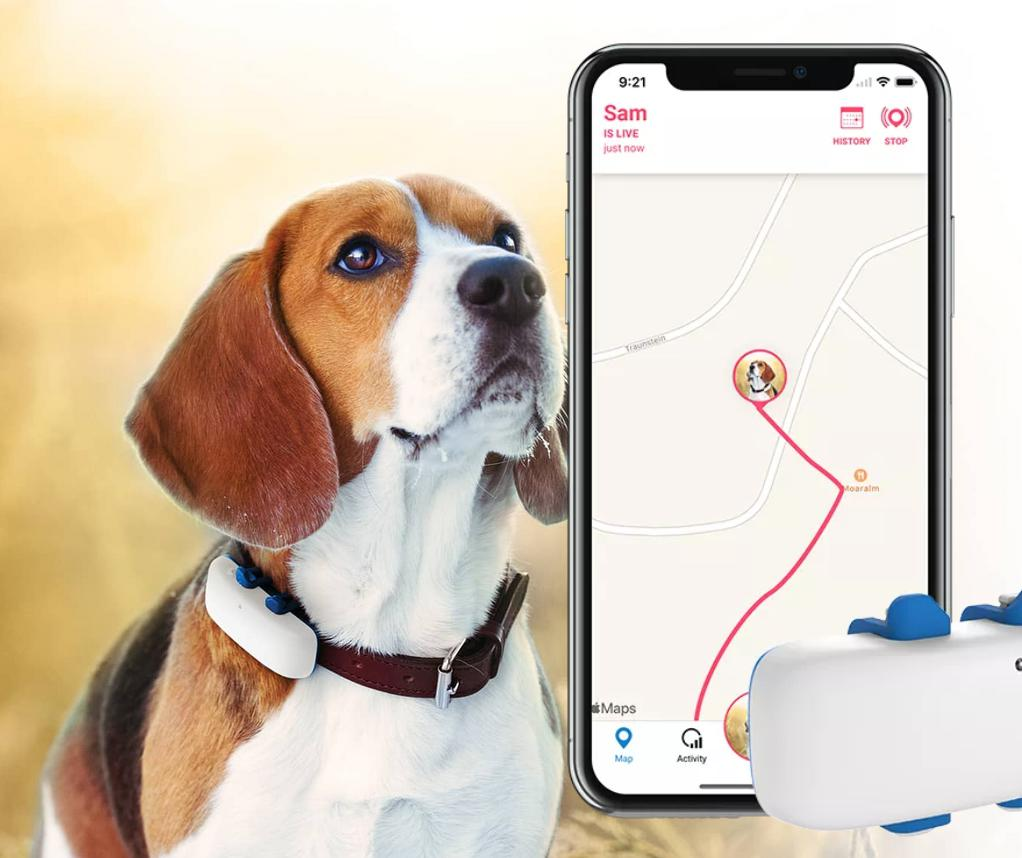 GPS for Dogs home