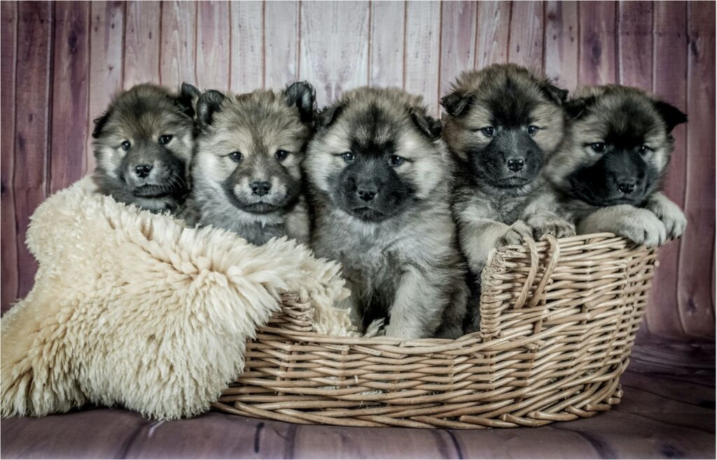 Puppies in dog bed